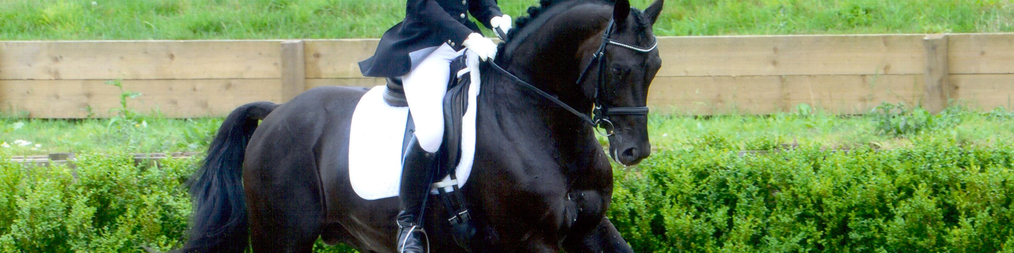 Sparks Equestrian - Horse training and livery in Hampshire