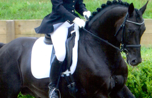 Training and Livery - Sparks Equestrian
